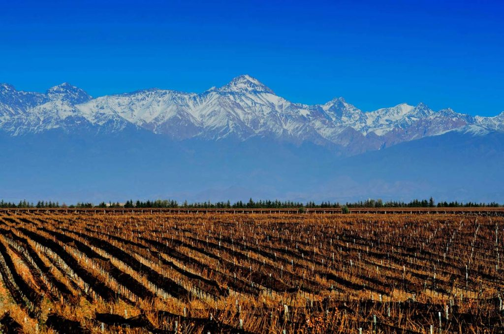 Domaine Bousquets vingårdar omfattar idag ca 240 hektar.
