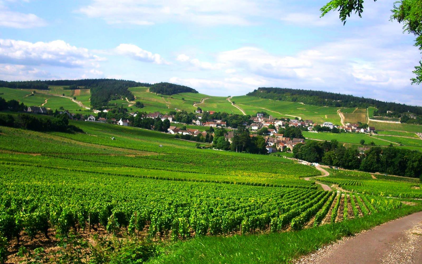 Domaine Habrards vingård består av relativt gamla vinrankor där en stor del är mellan 30 och 60 år gamla.